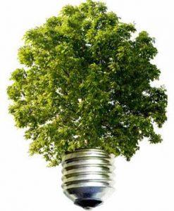 Milieu FSC